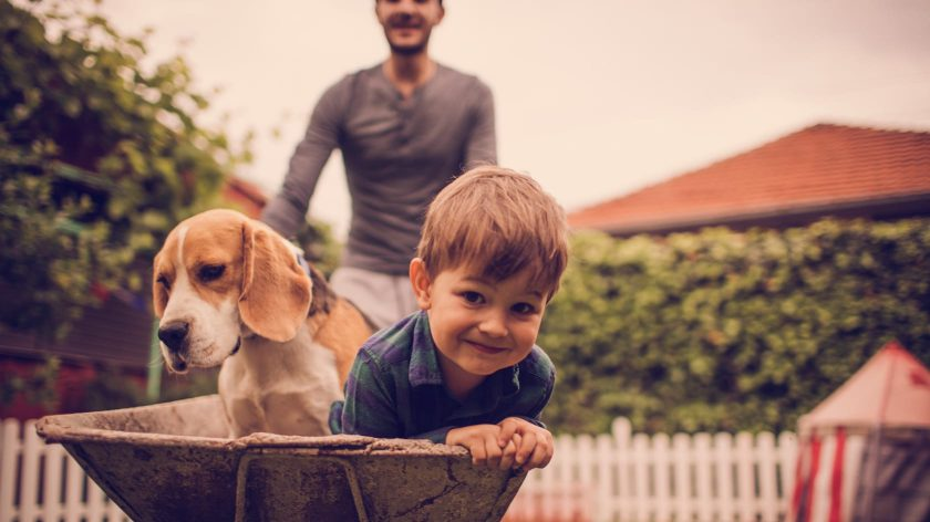 Child and dog in a wheelbarrel
